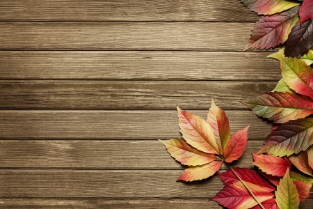 가을 복사본 공간이 나무 배경 위에 나뭇잎
