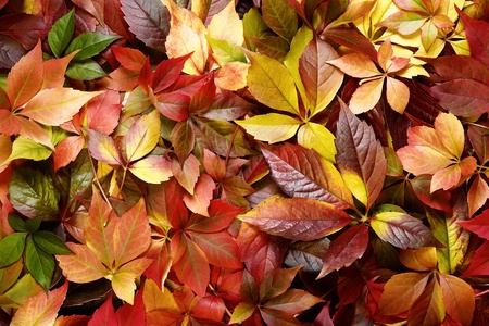 Autumn leaves background Stock Photo - 10942873