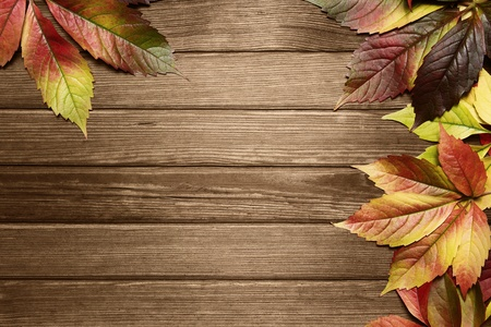 Autumn leaves background with copy space Stock Photo - 10942877