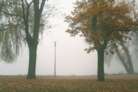 Park alley in autumn fog Stock Photo - 11157658