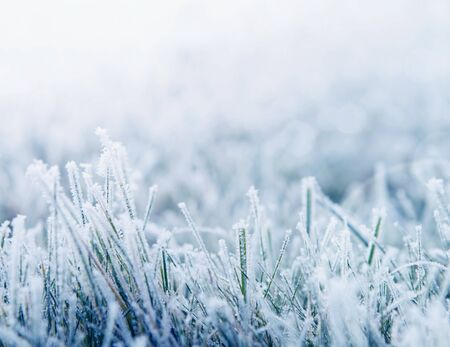 Winter background, morning frost on the grass with copy space photo