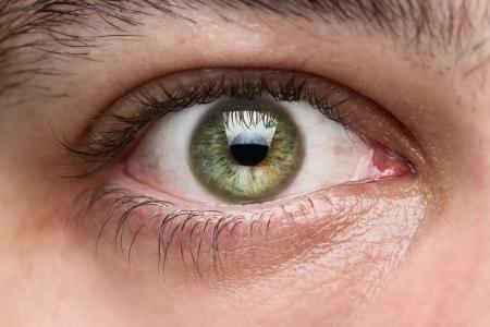 눈알: 닫기 인간의 눈까지