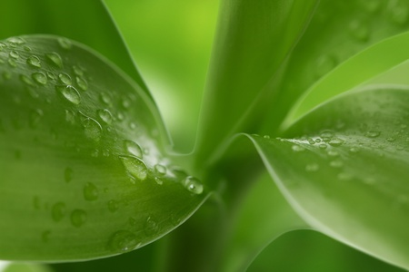 Nature background of water drops at bamboo leaves Stock Photo - 12954580