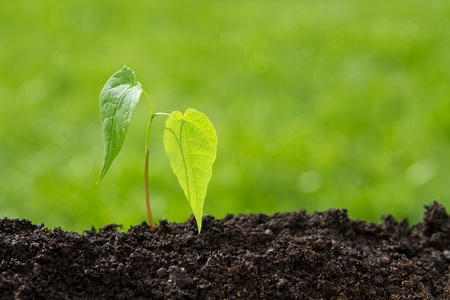 thrive: Small plant growing up from soil over defocused background with copy space