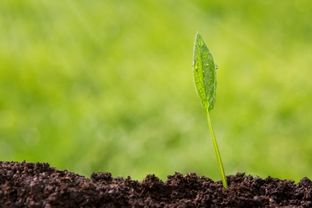 Small plant growing up from soil over defocused nature background photo