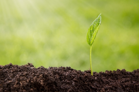 soil: Small plant growing up from soil over defocused nature background with copy space