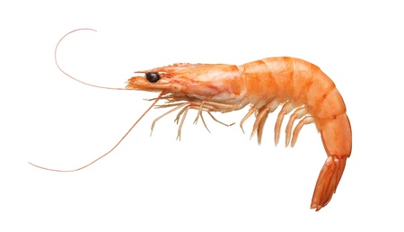 boiled: Close up of fresh boiled tiger shrimp isolated on white background Stock Photo