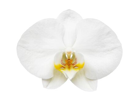 Close up of orchid flower isolated on white background Stock Photo - 18630638
