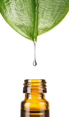kosmetik: Wassertropfen fallen vom Blatt auf wei�em Hintergrund mit Kopie Raum