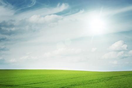 Sunny empty field with copy space Archivio Fotografico