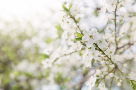 Close up of spring blossom with copy space Stock Photo - 19606352