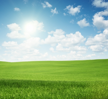 Rural landscape, empty green field with copy space Stock Photo