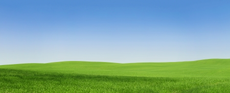 Panoramic view of an empty green field with copy space Archivio Fotografico