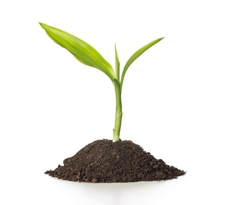 Cerca de la pequeña planta que crece de la tierra sobre fondo blanco, con copia espacio