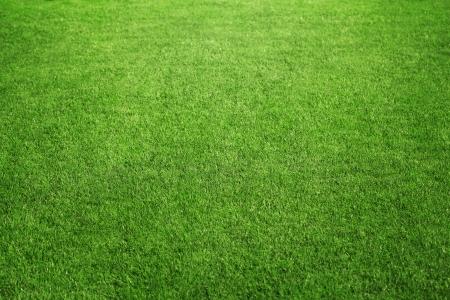 完璧な緑の芝生のフィールドまたはコピー スペースと裏庭でクローズ アップ 写真素材