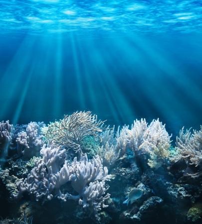 Rustige onderwaterscène met een kopie ruimte Stockfoto