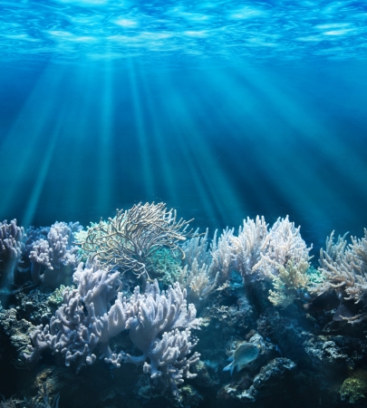 coral ocean: Tranquil underwater scene with copy space Stock Photo