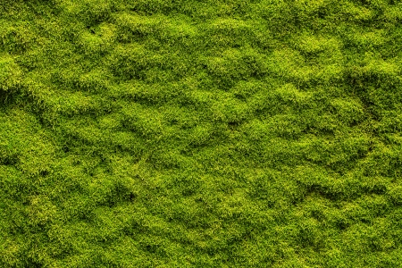 Moss texture, background with copy space Stock Photo