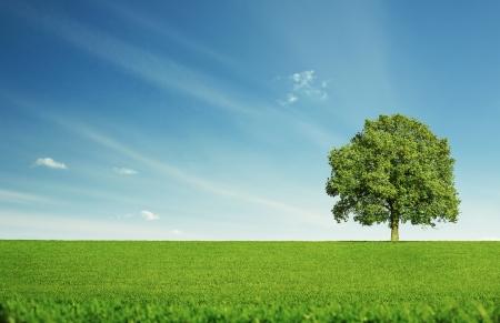 Eenzame boom bij de lege groene veld met een kopie ruimte Stockfoto