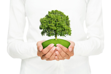 Environmental conservation, female hands holding small tree isolated on white background