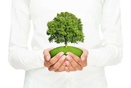 Milieubehoud, vrouwelijke handen houden van kleine boom op een witte achtergrond Stockfoto