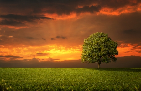 Lonely tree on the empty field at the sunset photo