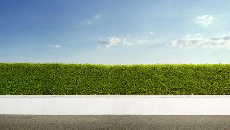 緑色の青い空とヘッジ 写真素材