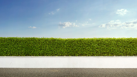 Green hedge with the blue sky