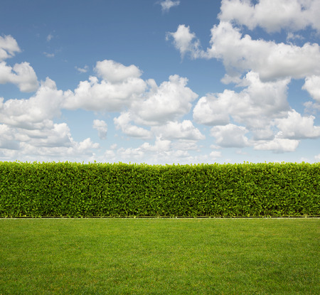 clouds: garden: Back Yard, close up of hedge fence on the grass with copy space Stock Photo