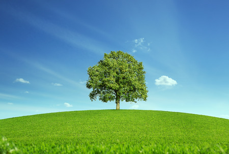 Lonely tree at the empty green field with copy space