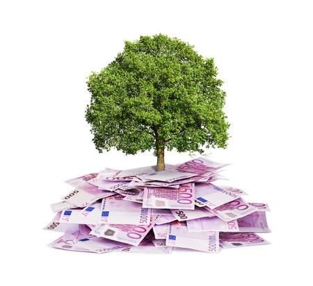 banco dinero: Concepto de la inversi�n, �rbol que crece fuera de la pila de billetes de euro