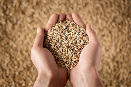 full: Harvest, close up of farmers hands holding wheat grains Stock Photo