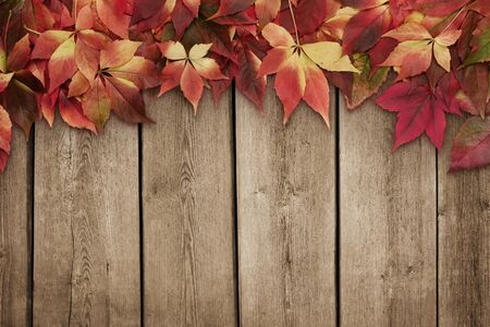 autumn leaves: Autumn leaves on blue wooden background with copy space