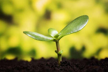 Wachstum Symbol. Kleine Pflanze aufwachsen aus der Erde über defocused Hintergrund mit Kopie Raum Lizenzfreie Bilder