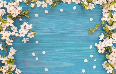 wood texture: Spring background, frame of white blossom on old blue wooden desk with copy space