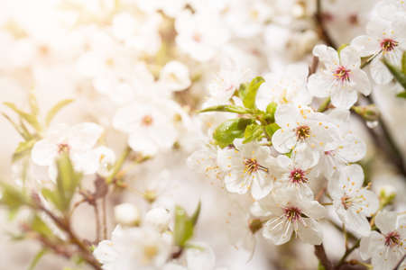 Frühling Blüte Hintergrund mit Kopie Raum