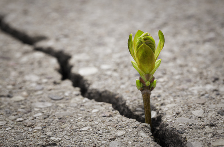 Close up of plant growing up from crack in the asphalt road with copy space