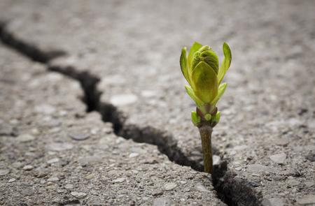 Nahaufnahme von Pflanze wachsen aus Riss in der asphaltierten Straße mit Kopie Raum Lizenzfreie Bilder