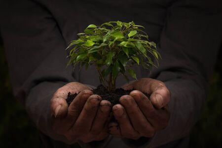 Nahaufnahme von männlichen Händen halten kleinen Baum mit Kopie Raum