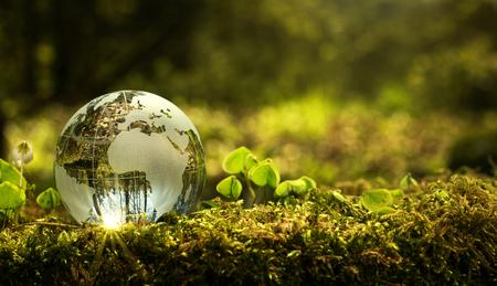 Concepto de conservación del medio ambiente. Cerca de globo de vidrio en el bosque con espacio de copia Foto de archivo