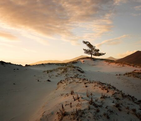 Lonely tree on a sand dunes at the sunset with copy space Lizenzfreie Bilder