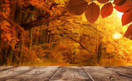 Autumn background, empty wooden table over defocused forest with copy space