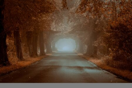 Empty, foggy road on the autumn morning with copy space Standard-Bild