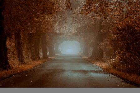 Leere, nebligen Straße am Herbstmorgen mit textfreiraum
