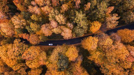 Hohe Winkelsicht einer Straße durch den Herbstwald mit Kopienraum