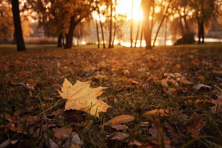 Herbst im Park bei dem Sonnenuntergang mit Kopienraum Standard-Bild