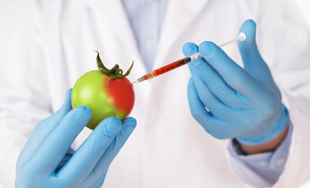 Concepto de modificación genética de alimentos. Cerca de científico inyectando jeringa en tomate
