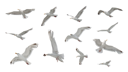 Set of seaguls in flight isolated on white background