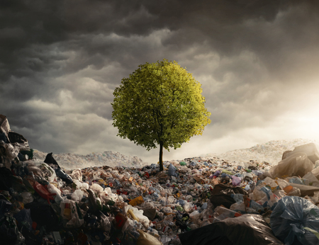 Lonely tree growing on the garbage dump, field at the sunset with copy space Stockfoto