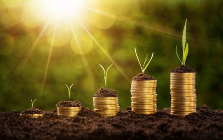 Investment concept, coins chart with growing plants over defocused nature background Stockfoto